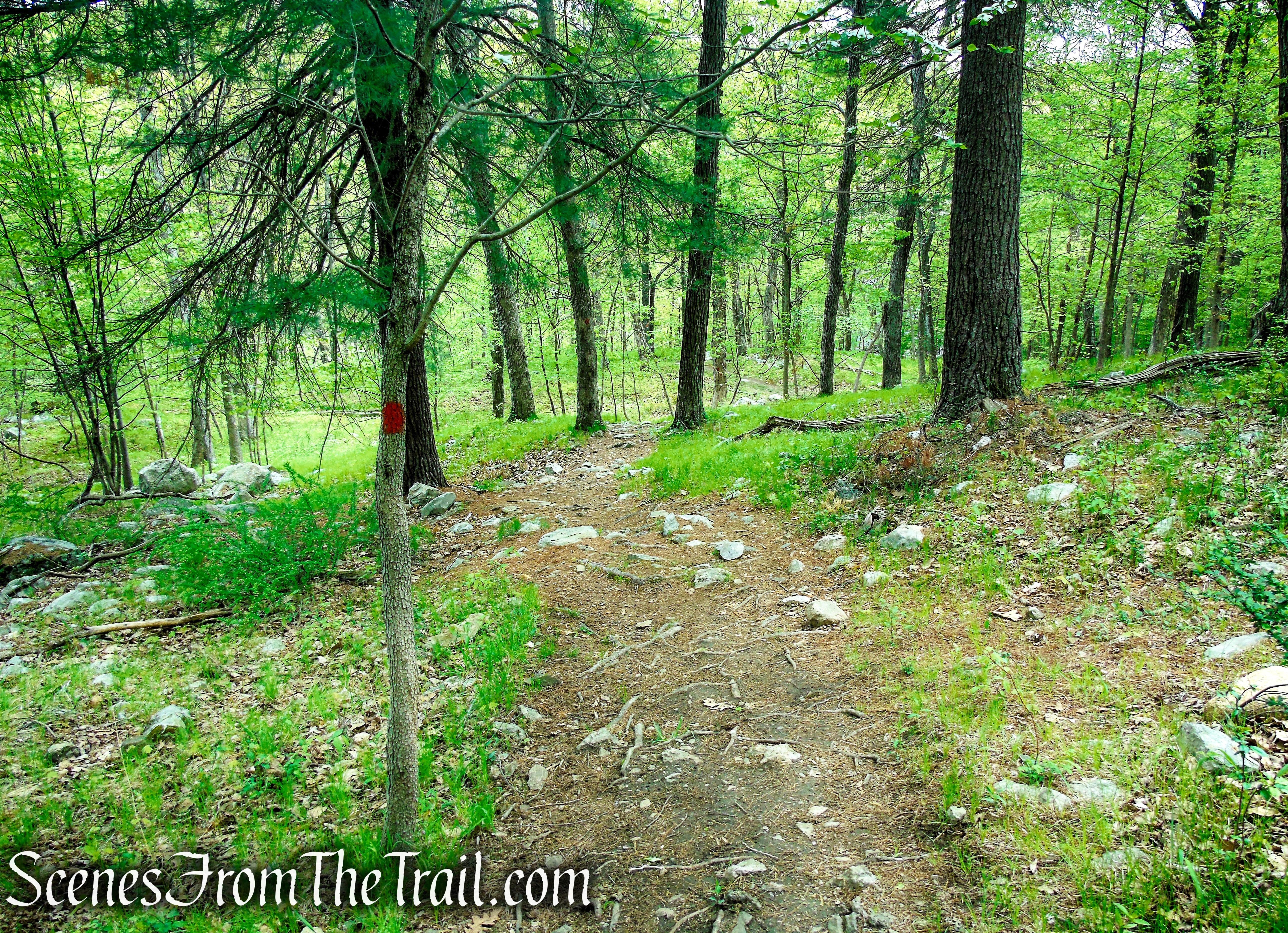 Orange Trail - Dater Mountain Nature Park