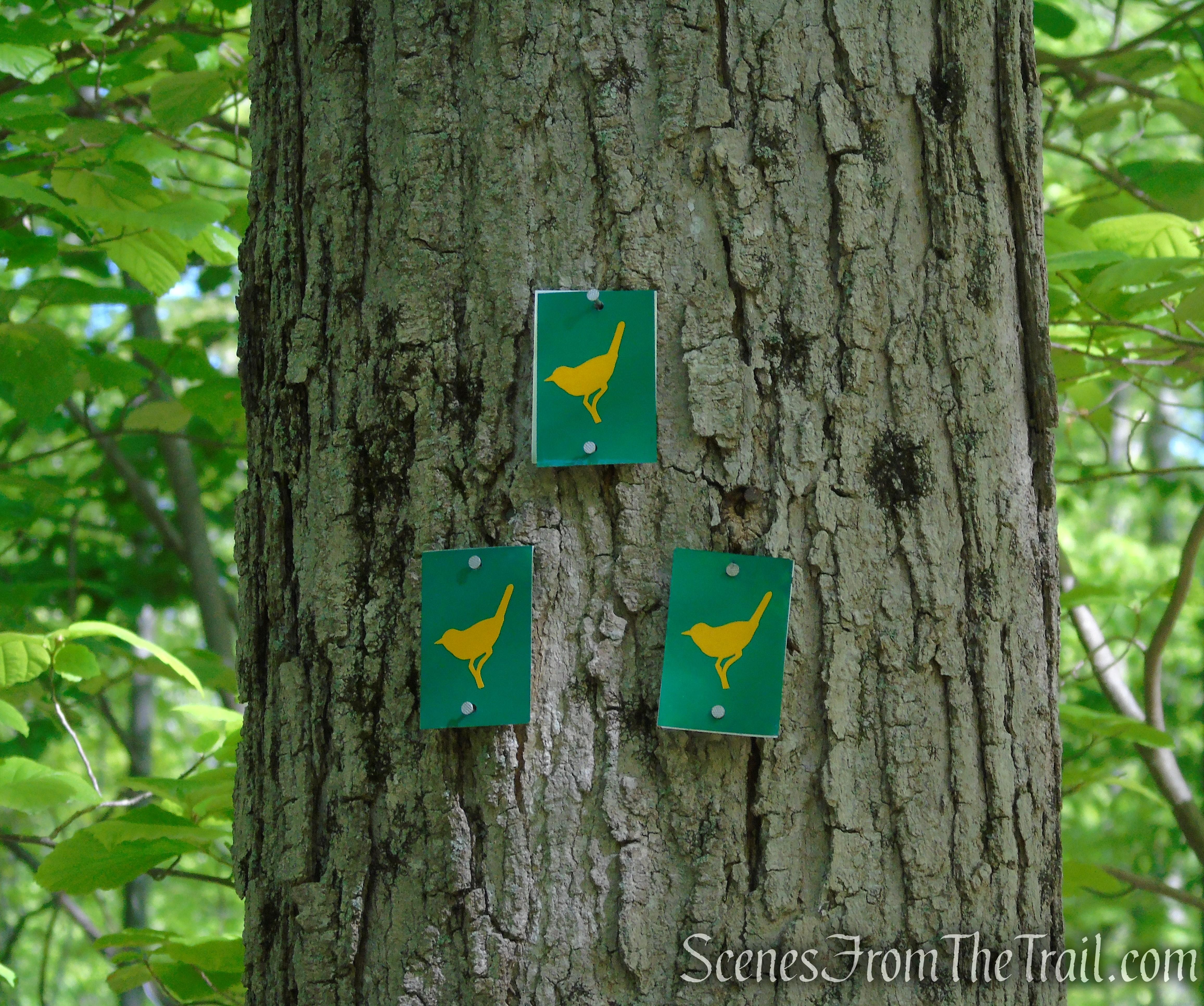 Warbler Trail - Sterling Forest State Park