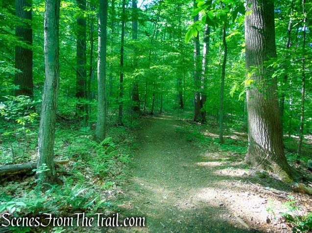 Green Trail - Black River County Park