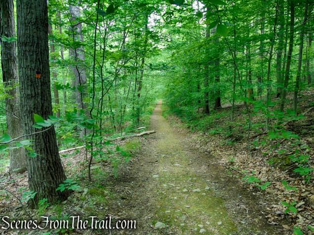 Blue/Orange Connector Trail - Black River County Park