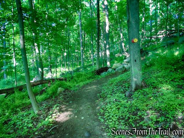 Red-Yellow Trail - Granite Mountain Preserve