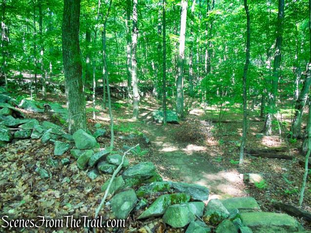 Yellow Trail - Granite Mountain Preserve