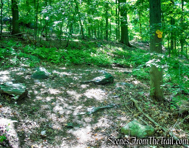 Terminus of Yellow Trail - Granite Mountain Preserve