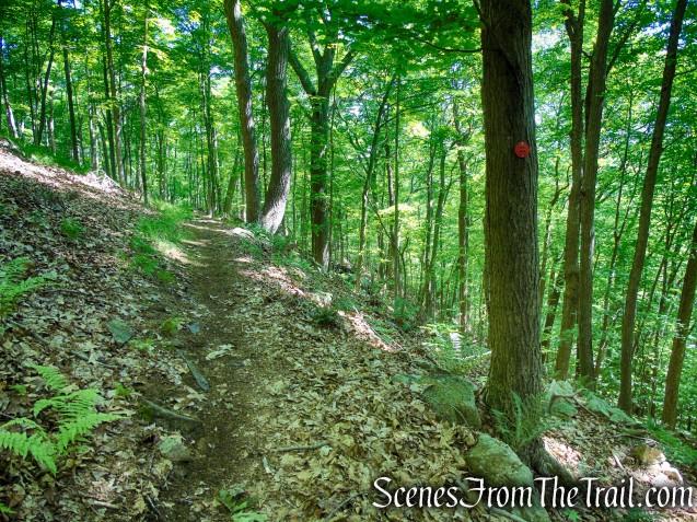 Red Trail - Granite Mountain Preserve