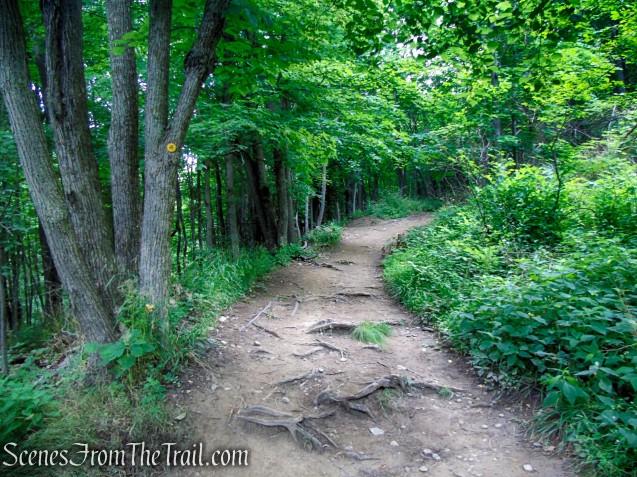 Wilkinson Memorial Trail - East Hudson Highlands