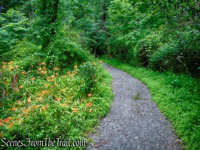 Lower Hornbecks Creek Trail