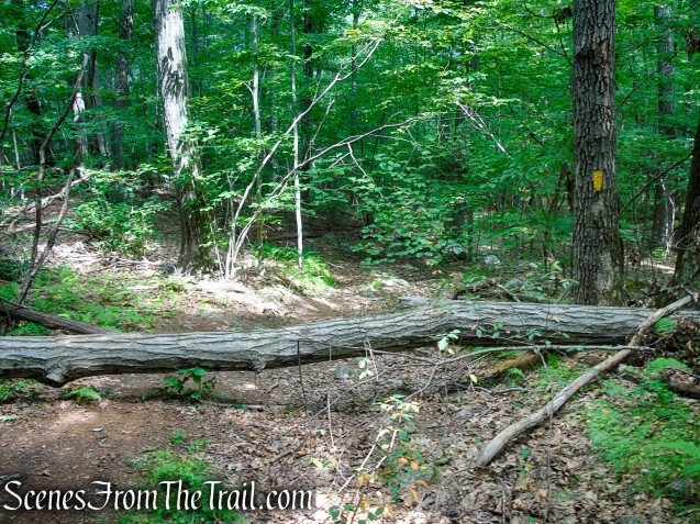 Yellow Trail - Pootatuck State Forest
