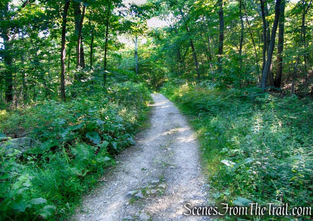 Fire Road - Pootatuck State Forest