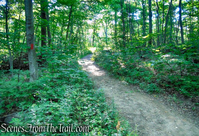 Orange Trail - Pootatuck State Forest