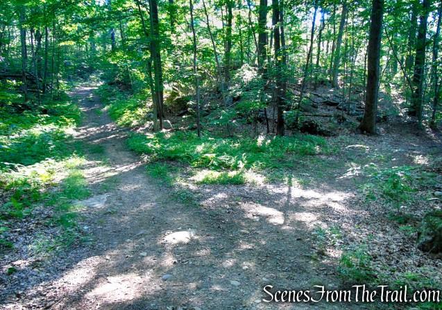 Continue straight on Orange Trail