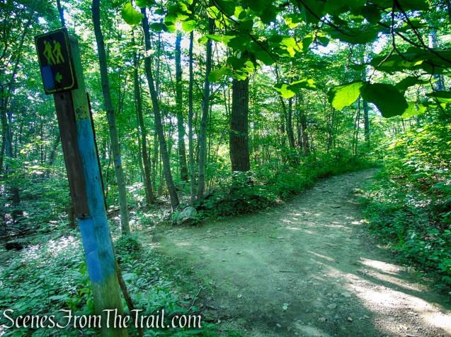 Turn left on Blue Trail