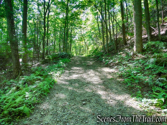 Forest/CCC Road - Pootatuck State Forest