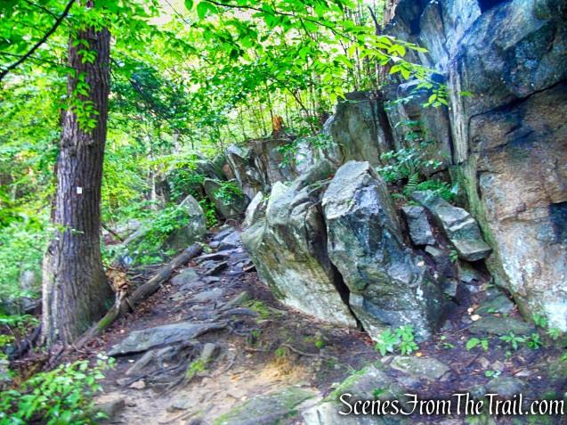 Scenic Trail - Black Rock Forest