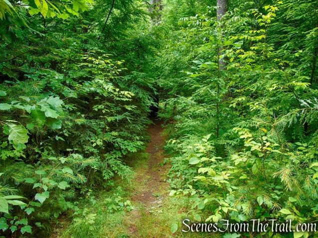Unmarked trail - Upper Hornbecks Creek